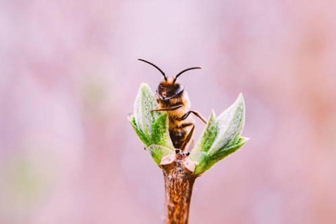 Vanaf augustus zijn wespen agressiever dan ooit | Horeca ...